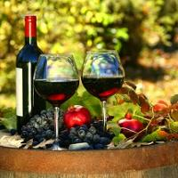Food, restaurant, travel guide - wines of Dalmatia